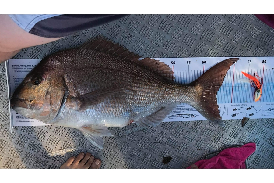 Adam Liddington caught this 64.5cm Snapper at Bay Of Islands during The DB Export NZ Fishing Competition