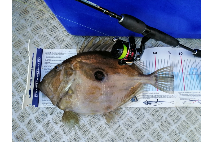 Brian  Gallogly caught this 45.5cm John Dory at Nth Waiheke during The DB Export NZ Fishing Competition