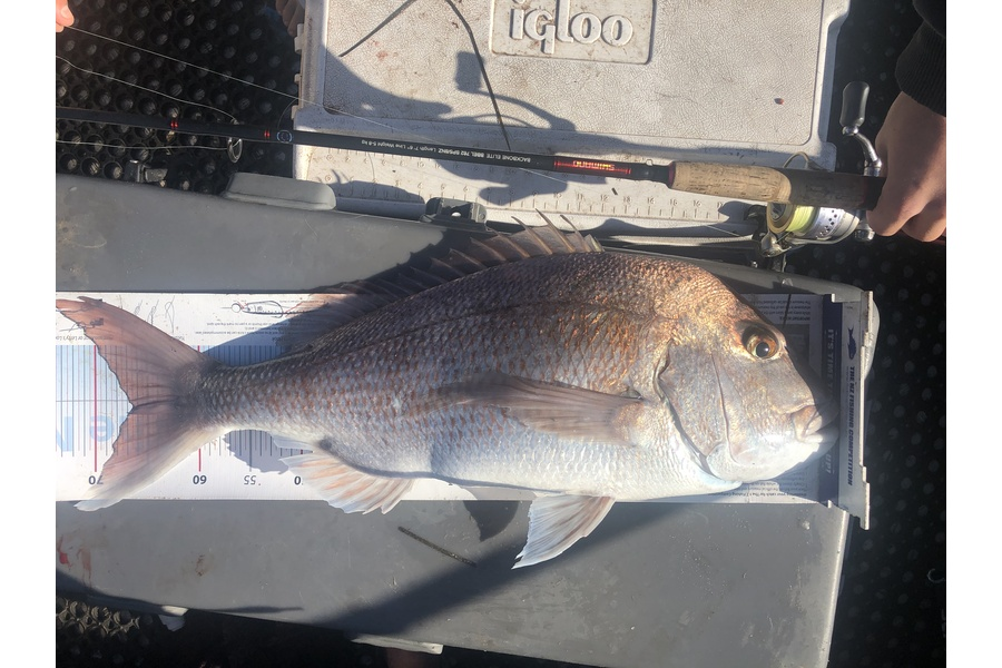 Brent Wall caught this 66.5cm Snapper at Cape Karikari during The DB Export NZ Fishing Competition