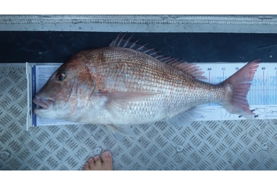 Brooke Summerville caught this 73.5cm Snapper at Doubtless Bay during The DB Export NZ Fishing Competition