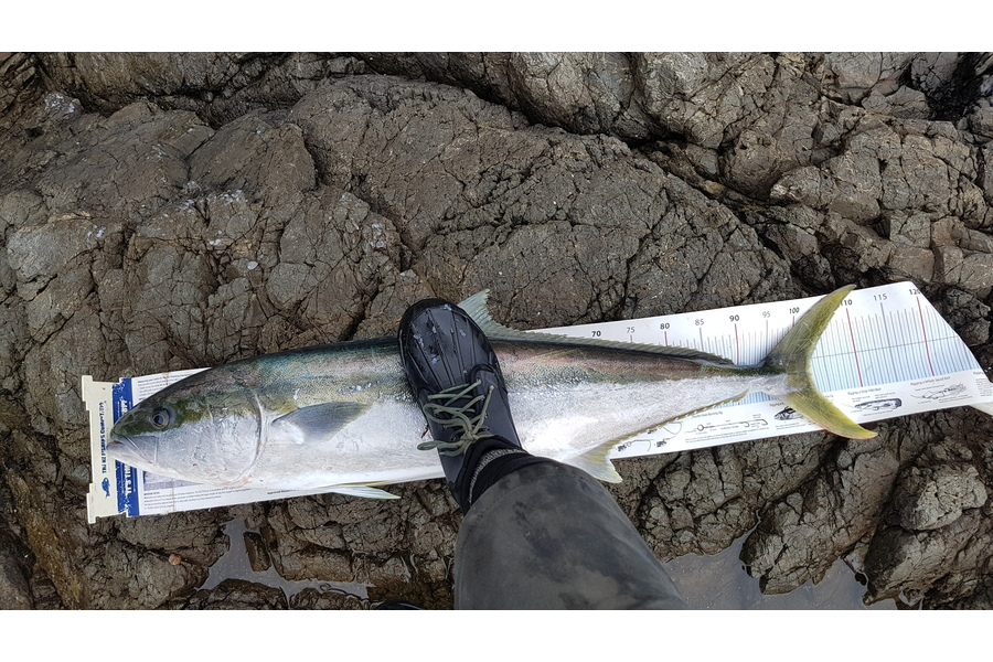michael Jenkins caught this 102.0cm Kingfish at Coromandel  during The DB Export NZ Fishing Competition