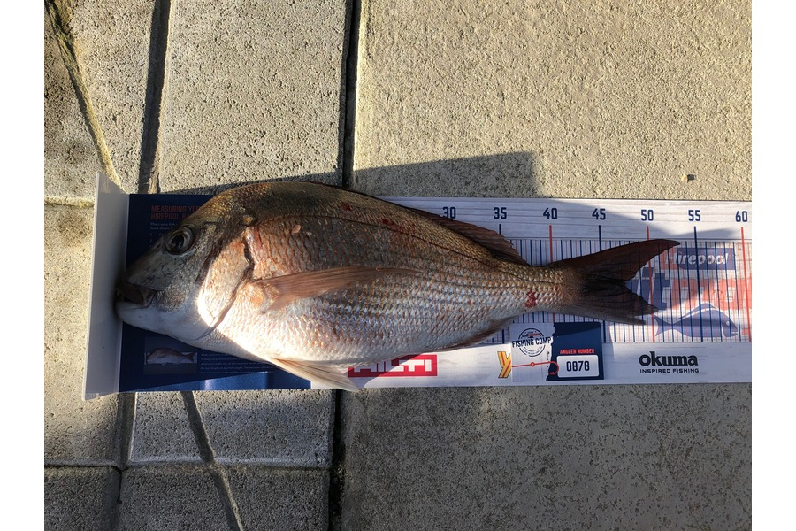 Dave Cunningham caught this 47cm Snapper at Hen & Chicks during The DB Export NZ Fishing Competition