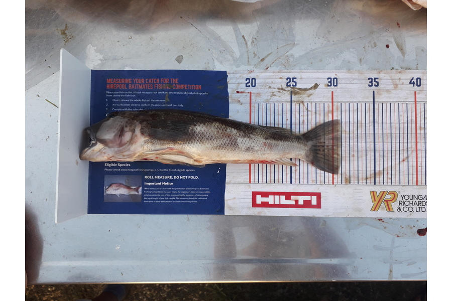 Nicole Wells-Green caught this 31.0cm Blue Cod at Mercury island during The DB Export NZ Fishing Competition