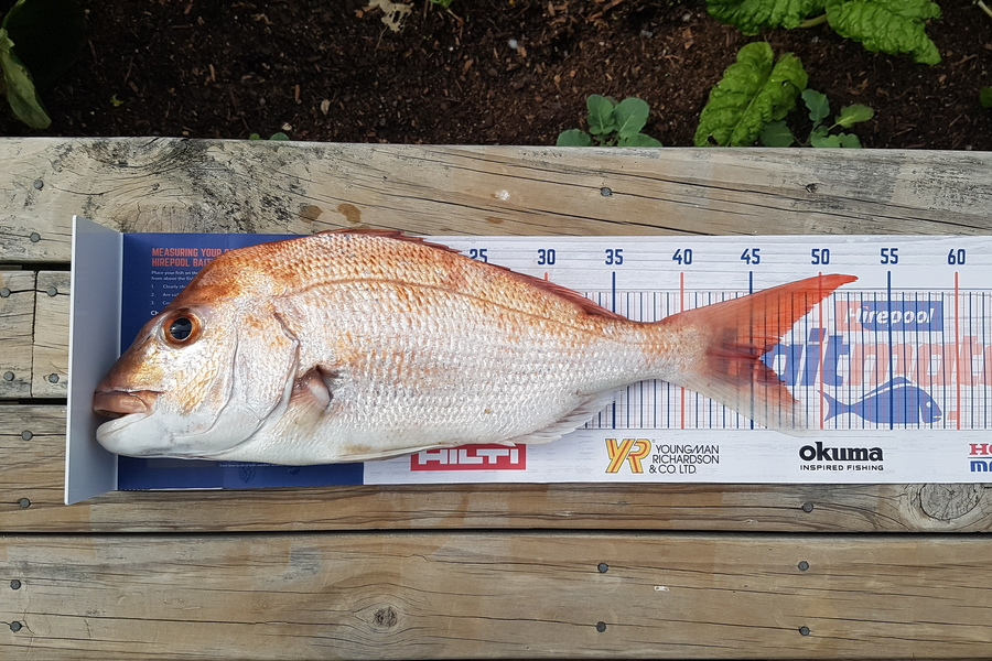 Robert Poono caught this 45.5cm Snapper at Half Moon Bay during The DB Export NZ Fishing Competition
