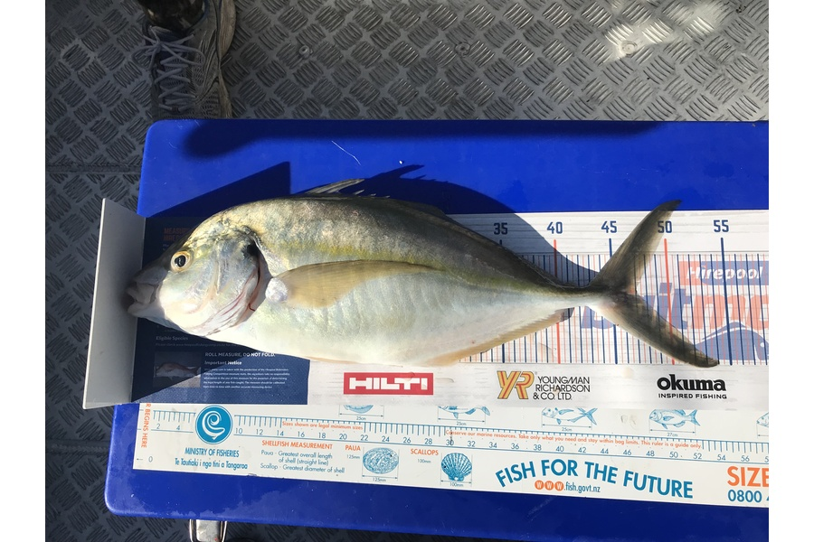 Bob Lewis caught this 46.0cm Trevally at Tauranga during The DB Export NZ Fishing Competition