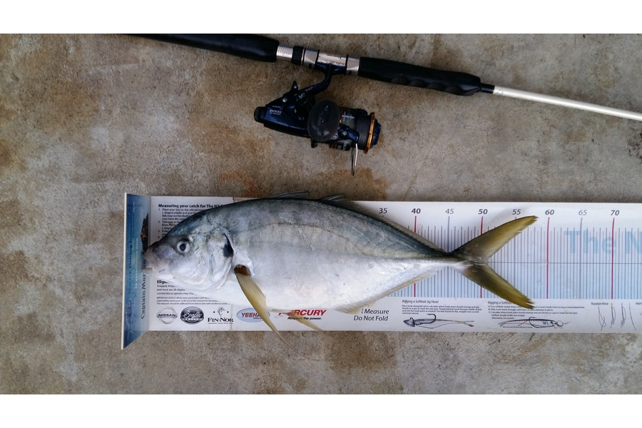 Graeme Mckay caught this 50.5cm Trevally at Gisborne during The DB Export NZ Fishing Competition