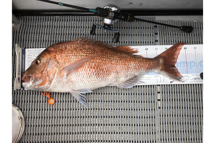 Greg Watkins caught this 74cm Snapper at Firth during The DB Export NZ Fishing Competition
